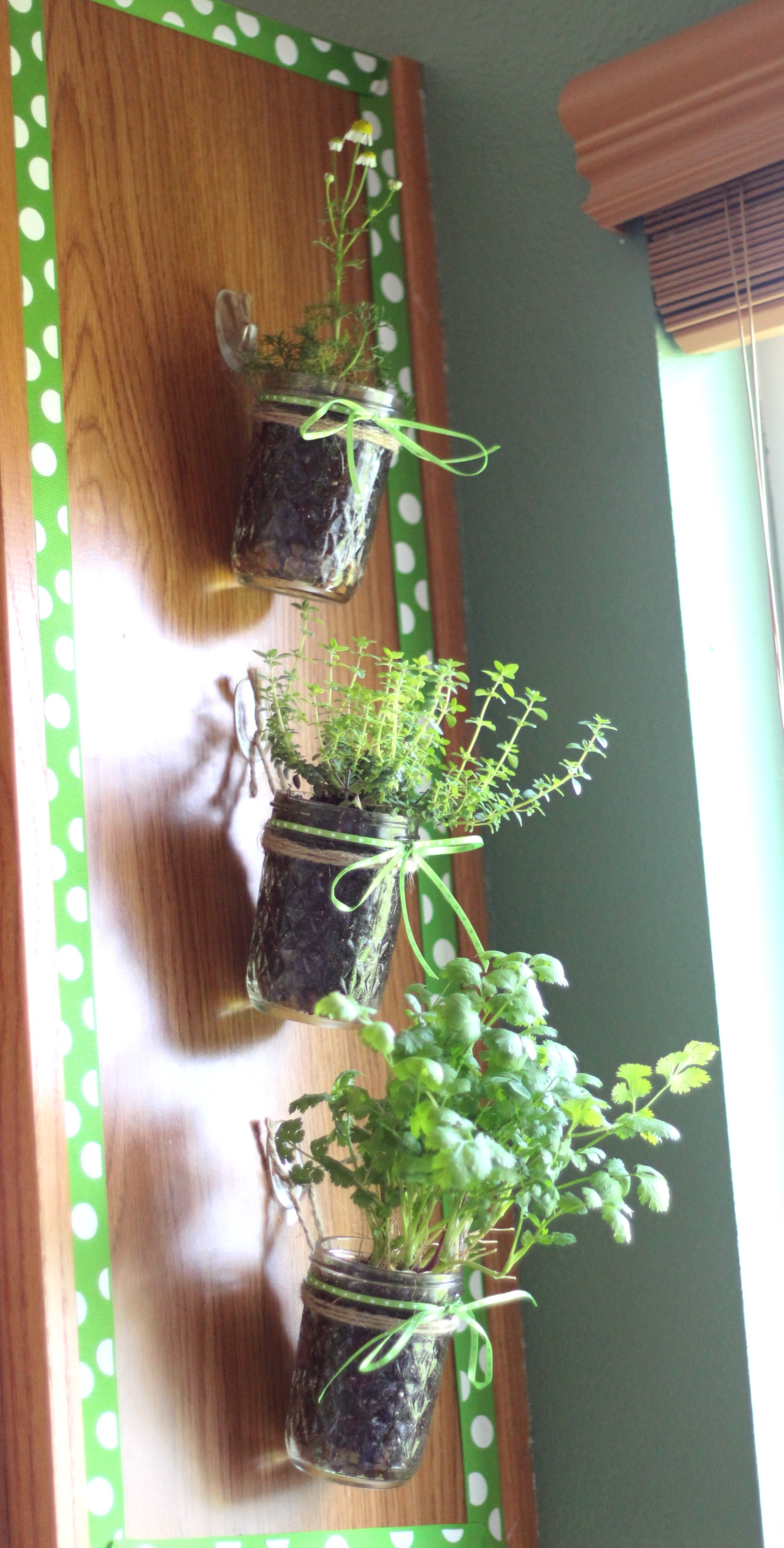 How To Make A Hanging Kitchen Herb Garden With Command Hooks Projectamazing Ad